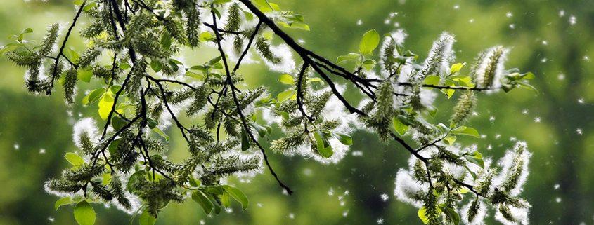 WholeFamilyMD, Blog, Seasonal Allergies